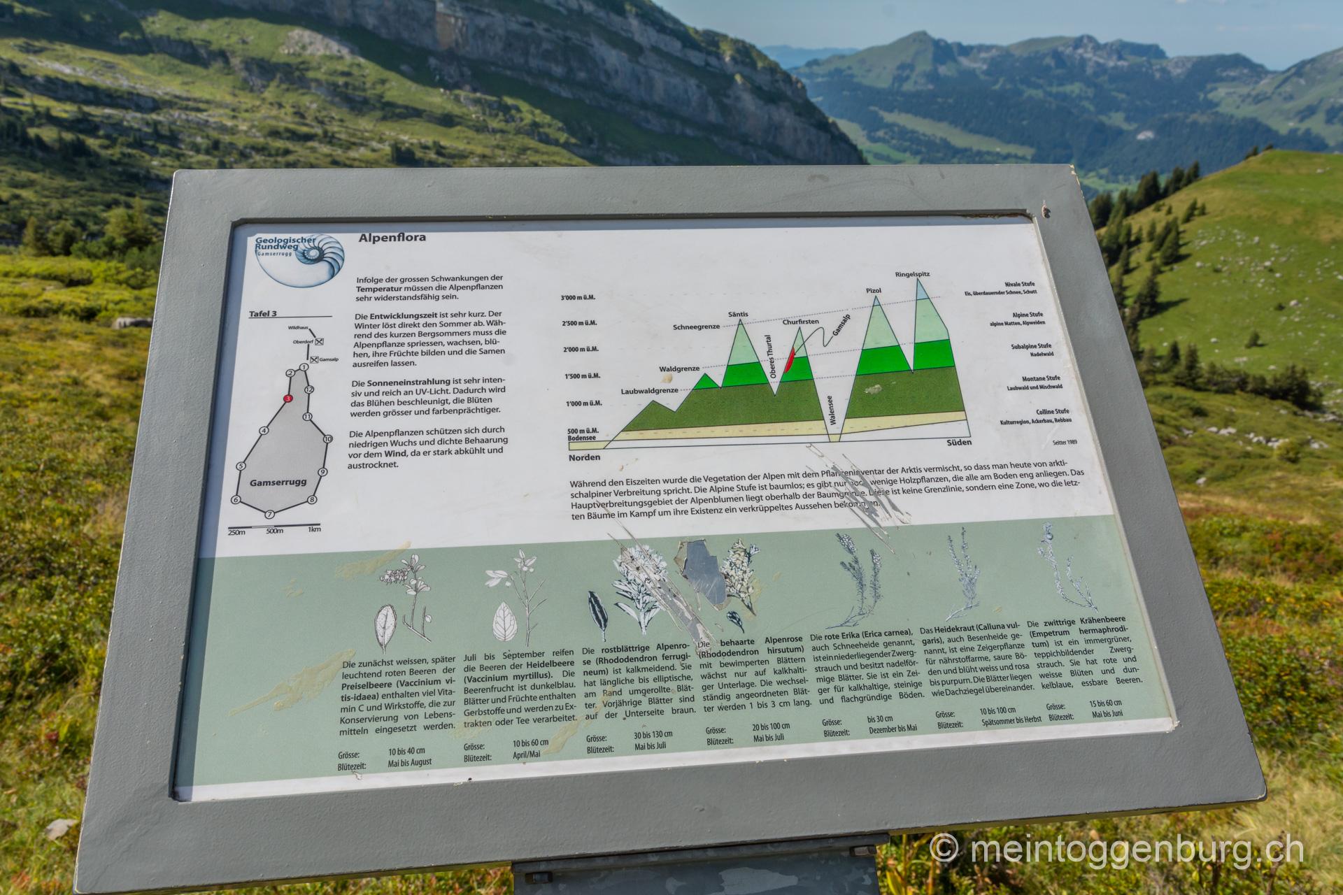 Geologischer Rundweg Gamserrugg