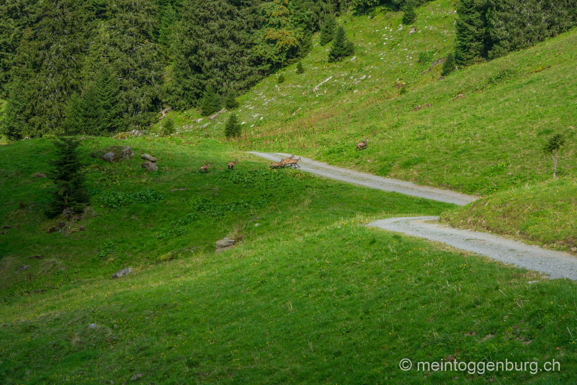 Schnürliweg